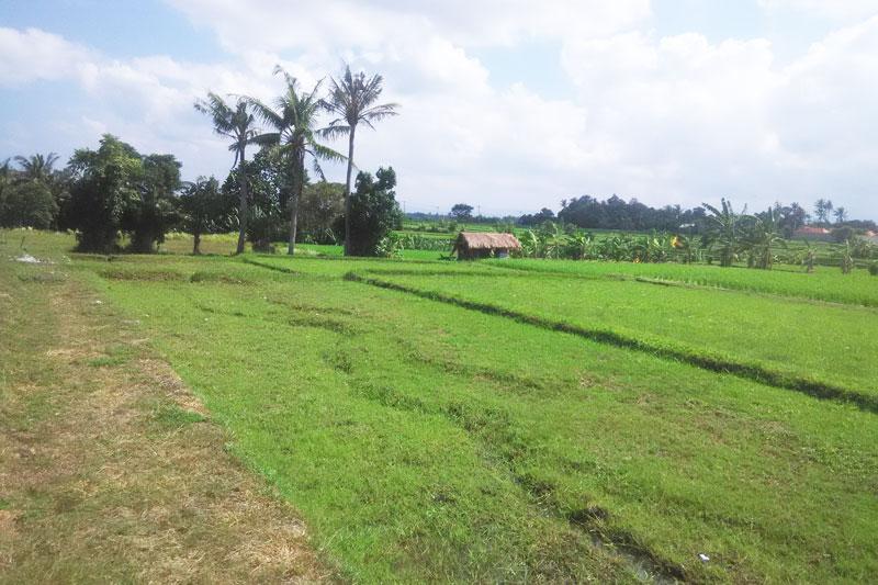 Rural Riverside Blank Canvas in Tabanan