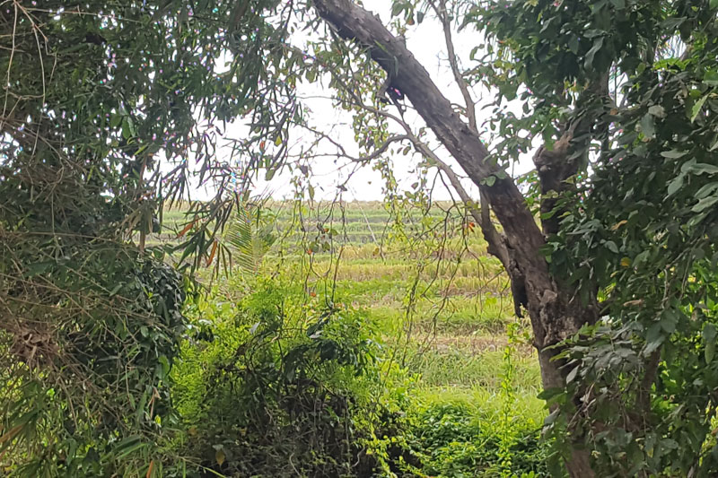 River Frontage and Greenbelt Rice Field Views Plot
